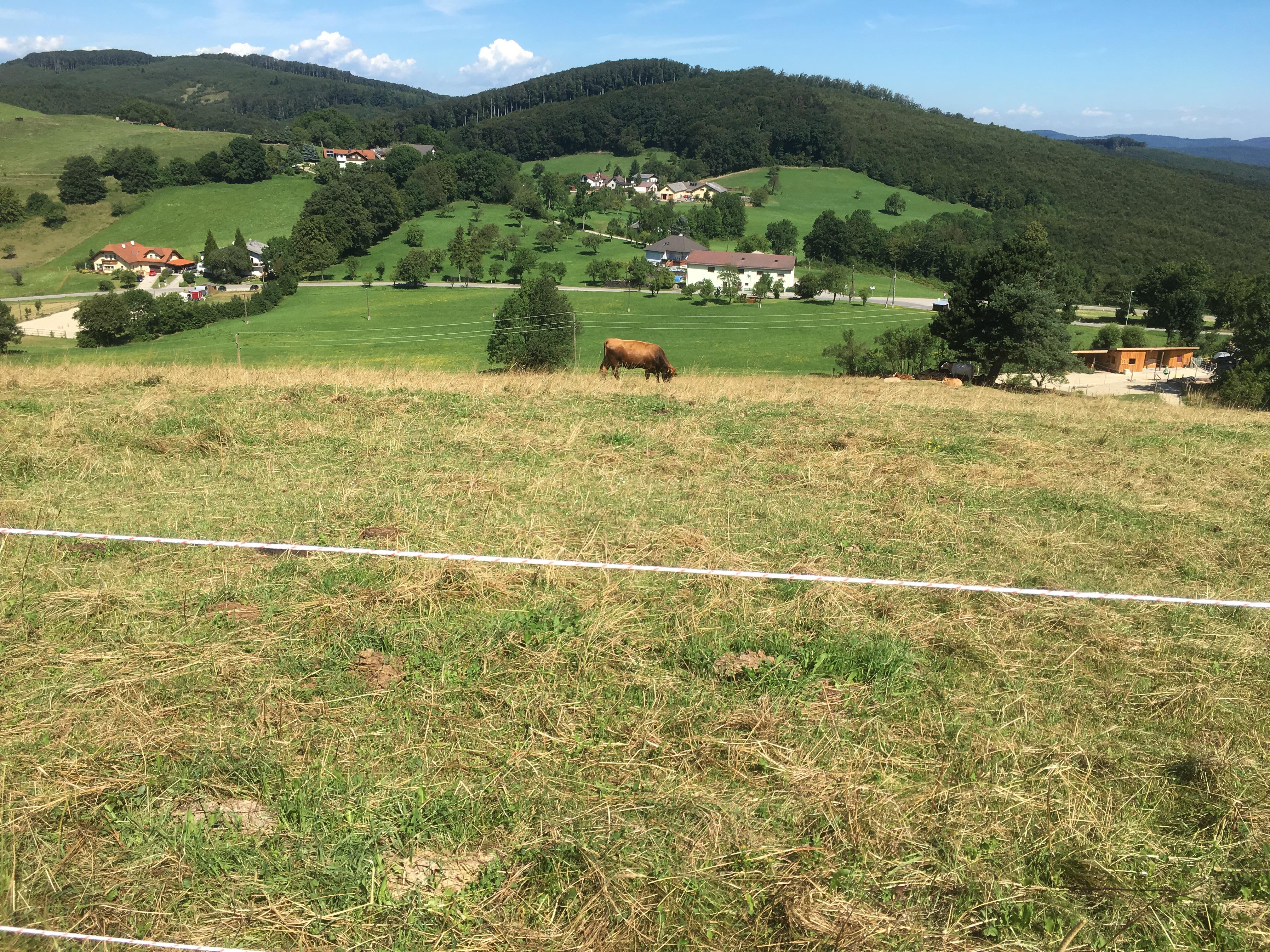 Ich wusste nicht das Pferde wie Kühe aussehen und am Westhang sind :)