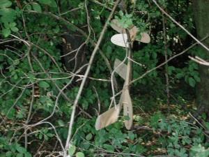 2000 - Hoppala. Keine Angst, diese Landung im Baum verlief ohne Schaden.